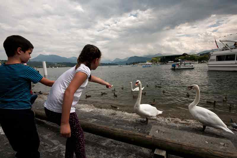 Feeding the swans in Luzern